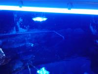 Proyectores Azules para acuario.jpg